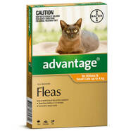 Advantage Orange for small cats and kittens single dose pack