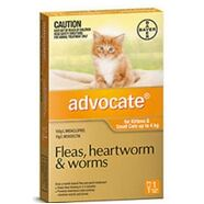 Advocate Small Cat SINGLE Dose Pack Orange for cats under 4kg