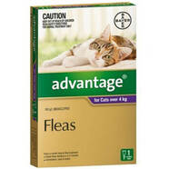 Advantage Purple Single Dose Pack for Cats over 4kg