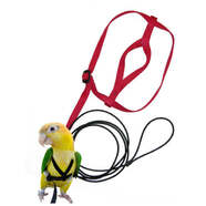 Aviator Bird Harness  & Leash Red
