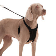 Sporn Mesh No Pull Harness
