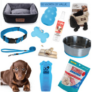 Puppy Pack Blue - Small Deluxe