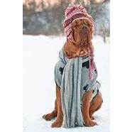 Winter Warming Tips for Pets